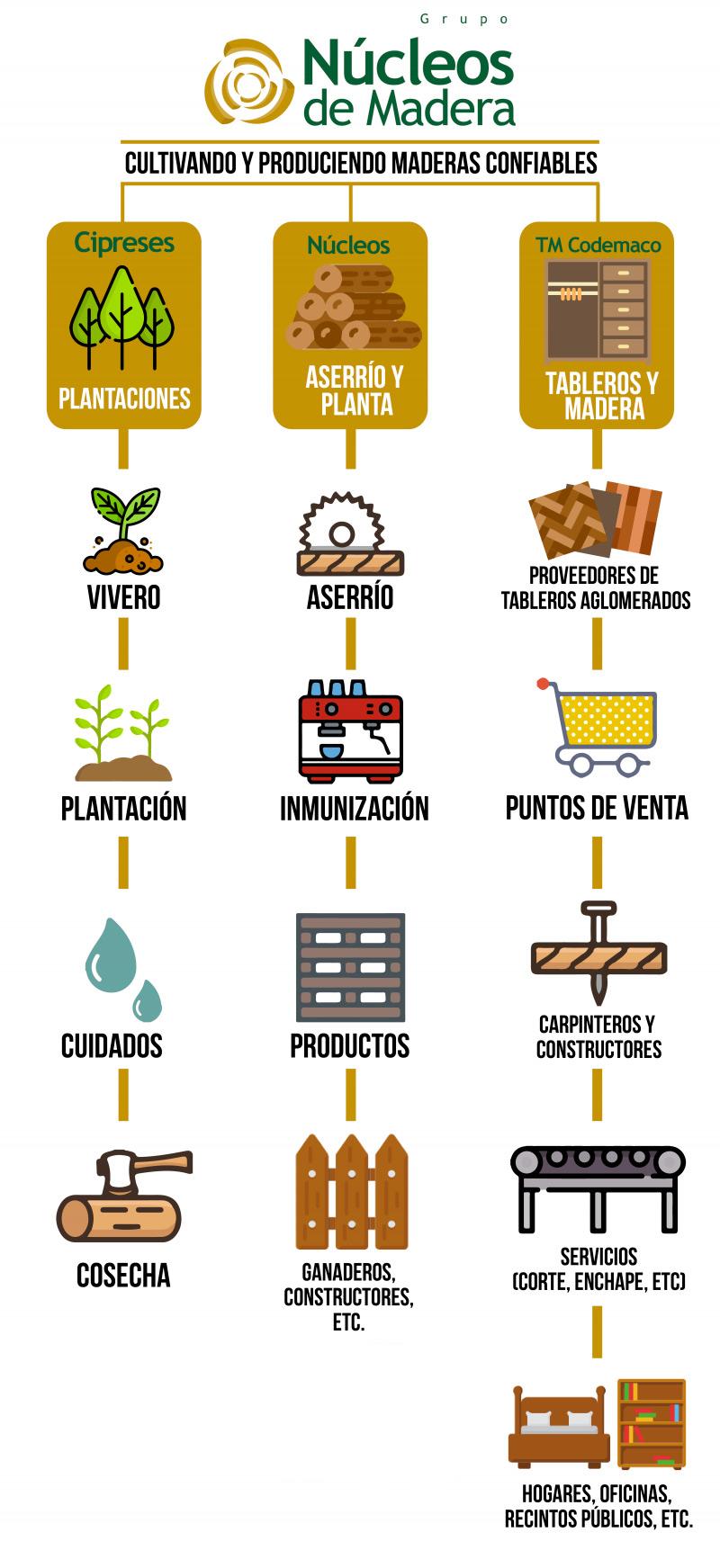 Infografia-Grupo-Nucleos-de-Madera